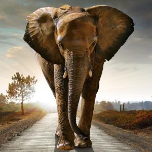 Elephant Witches Familiar 300x300
