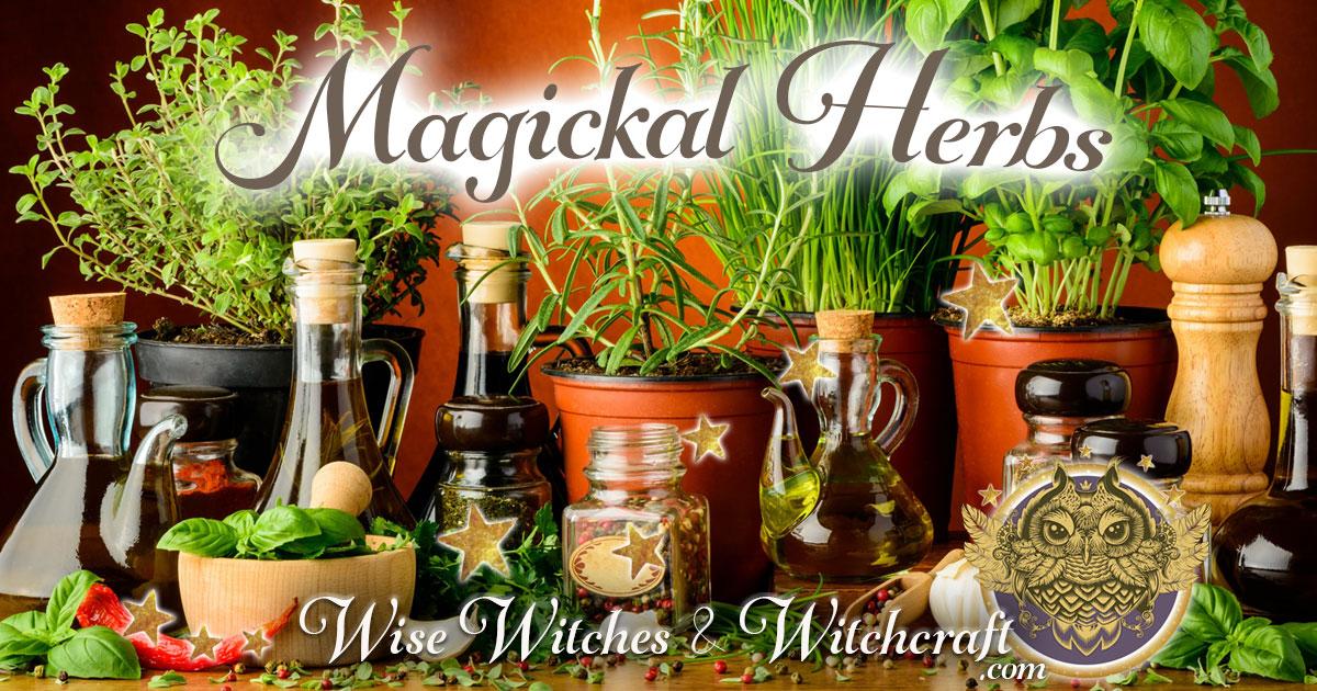 Magickal Herbs 1200x630