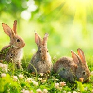 Rabbit Witches Familiar 300x300
