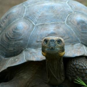Turtle Witch Familiar 300x300