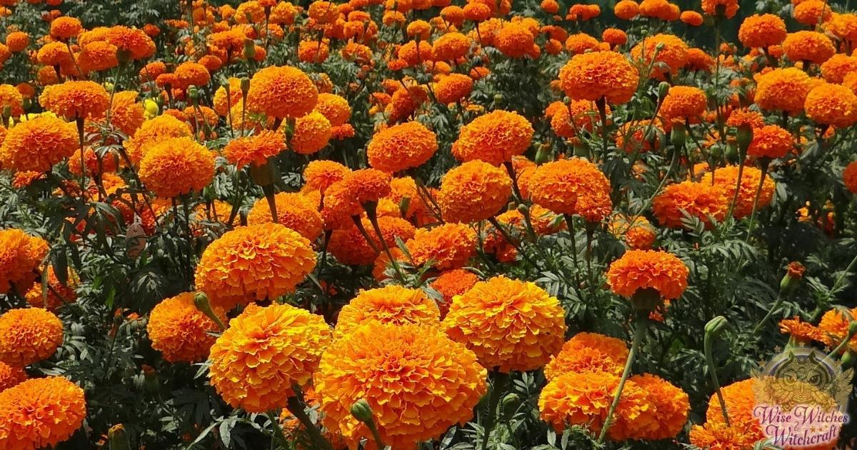 magic plants sacred to amaterasu 1200x630