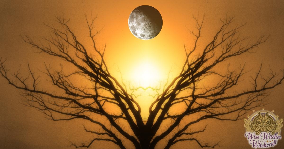 traveling the world tree meditation 1200x630