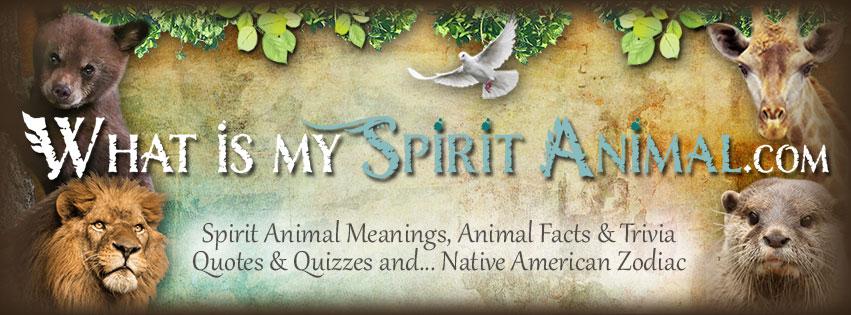 What Is My Spirit Animal 851x315
