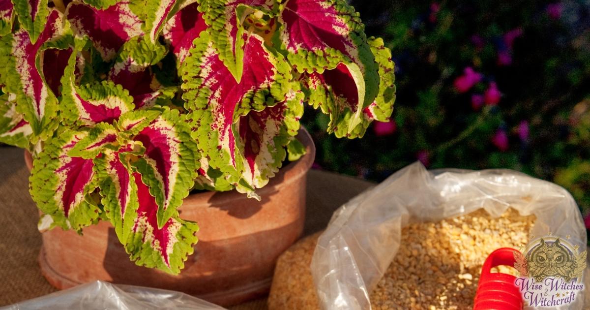 fertilizers for a healthy garden 1200x630