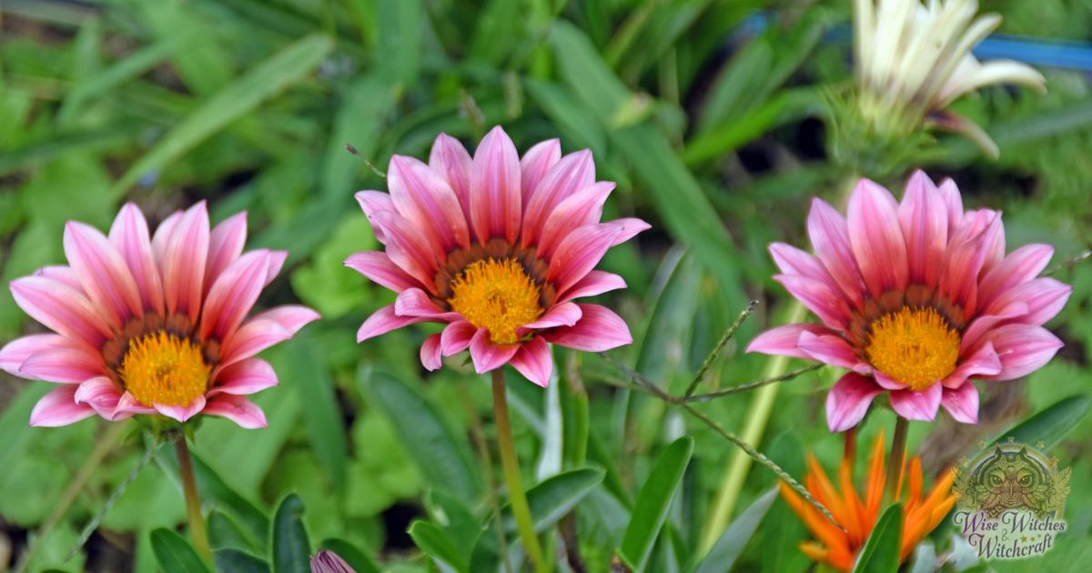 plants sacred to the goddess demeter 1200x630