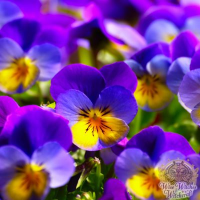 magical flowers sacred to gods heroes and immortals 1200x630